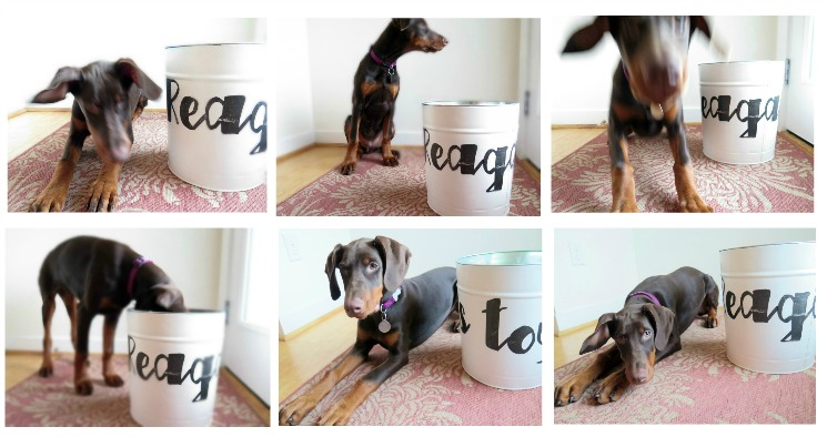 Clean up those puppy (or kids) toys easily with this fun and stylish DIY upcycle toy storage solution by reusing a popcorn tin!