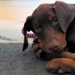 Surprising List of Puppy Supplies for Your First Puppy
