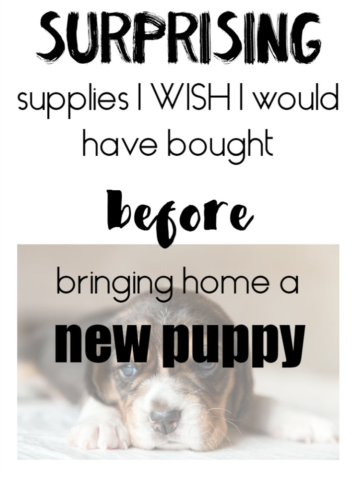These are all the pupply supplies I WISH I had before we brought home our new puppy! Read on to be more prepared than I was :)