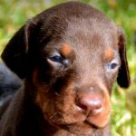 10 Steps to Prepare for a New Puppy