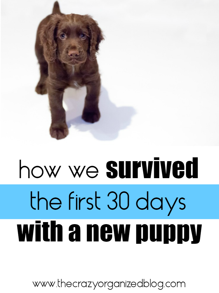 After 30 days with our new puppy there's lots we learned and lots we with we hand known! Check out our new puppy checklist of all our learnings!