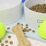 Tips to Cope with Pet Allergies